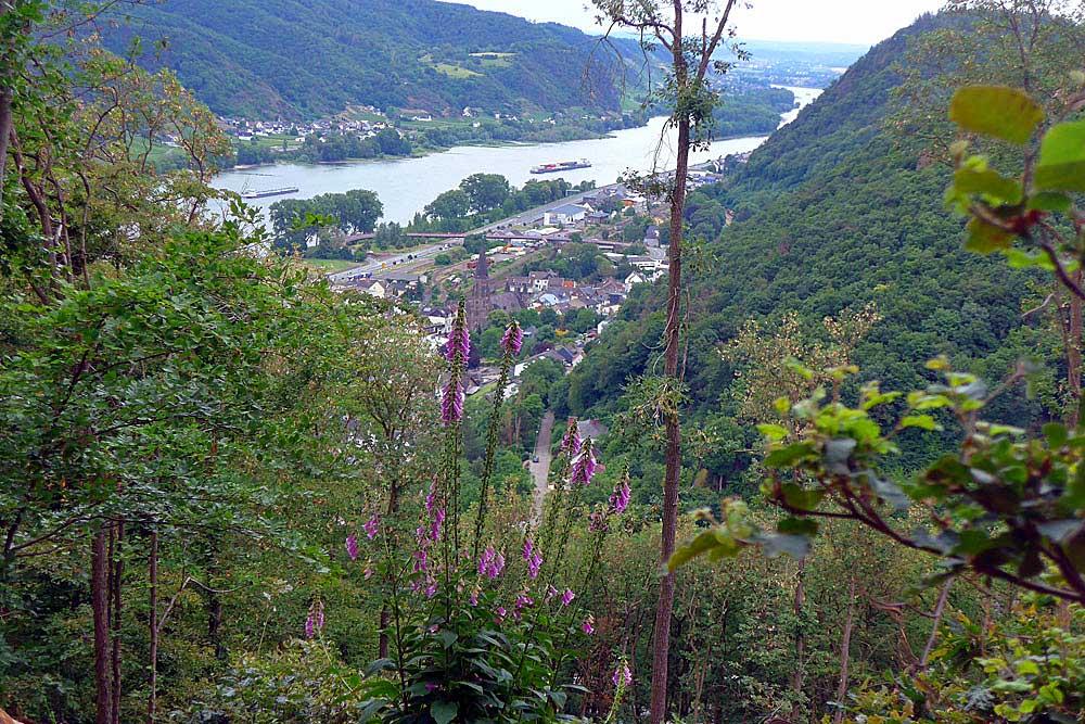 Eifelverein Linz - Quellenweg rund um Bad Breisig